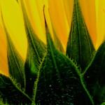 La nascita del giallo