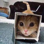 Gatti in scatola