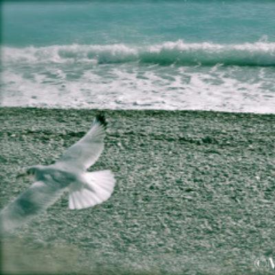 Immagina, La schiuma bianca, il mare
