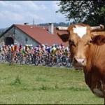 Il Giro!!