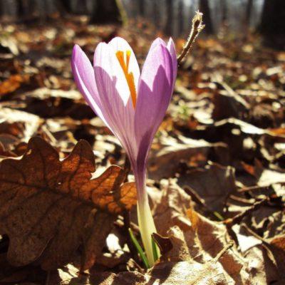 Immagina, Con la primavera