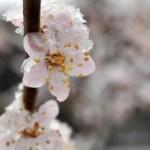 Sagra di primavera