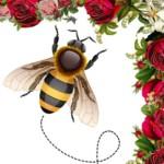 Càpita all'ape
