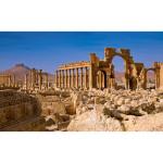 Palmira e il suo difensore