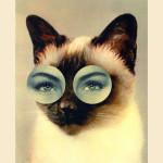 La sindrome del gatto randagio