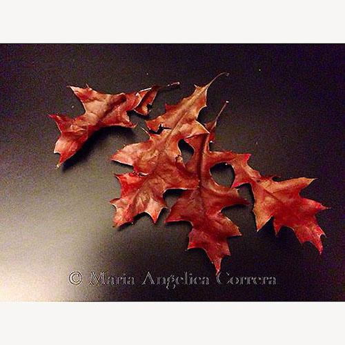 Canto d'autunno