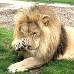 Gli animali dello zoo salveranno Roma
