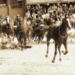 Cavallo Scosso