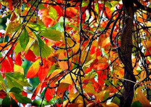 autunno-emily