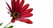 rosso oro Sabrina Suadoni foto gallery l'anima dei fiori