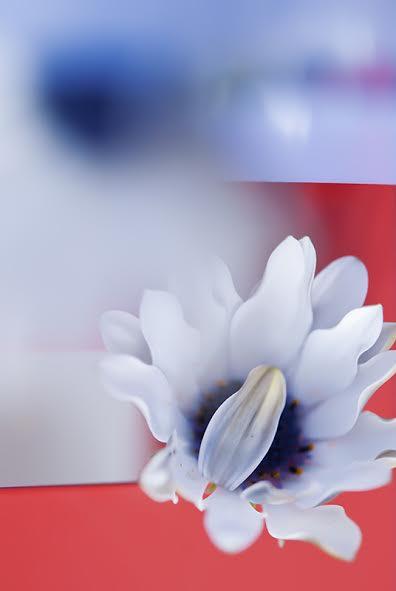 Foto gallery l'anima dei fiori Sabrina Suadoni, Brivido
