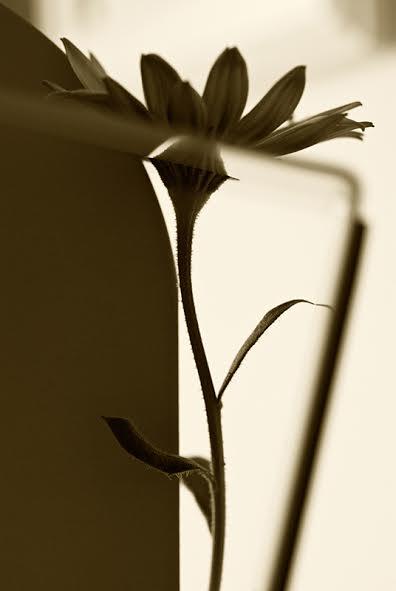 Foto gallery l'anima dei fiori Sabrina Suadoni, Ombra Luce